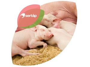 Sertap_design